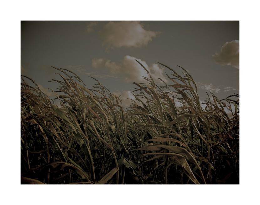 Landscape Belgium