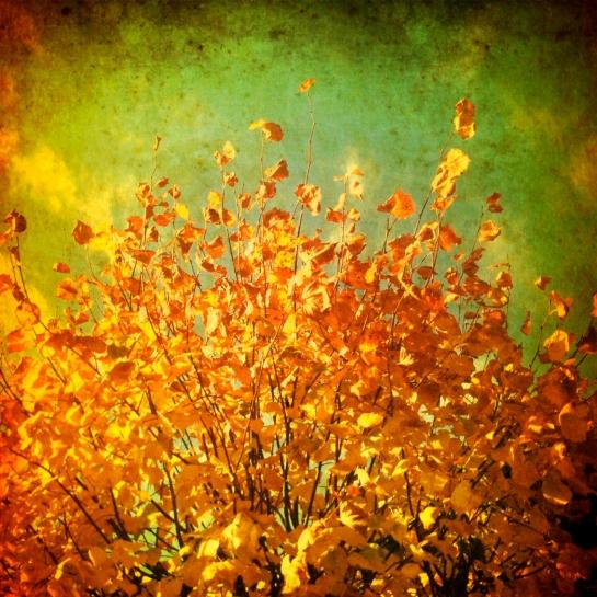 Autumn Twilight Series