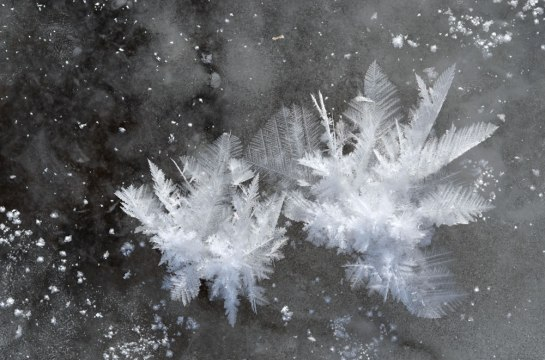 FeatherFrost2