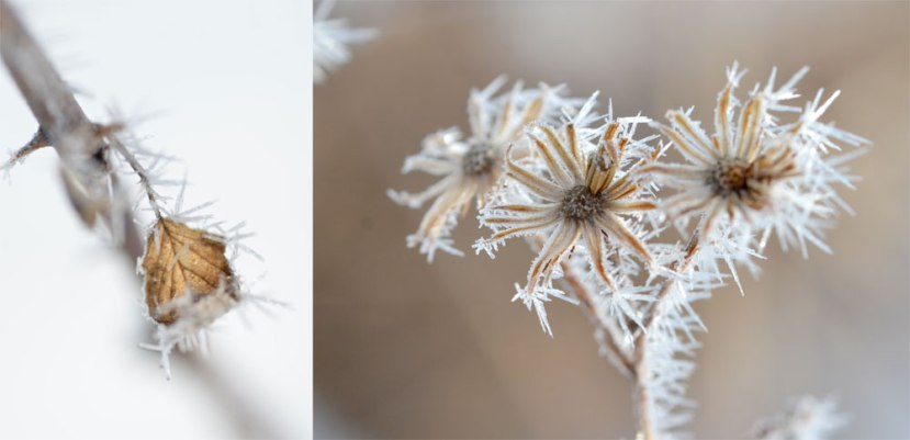 Fog-Frosted-Flora