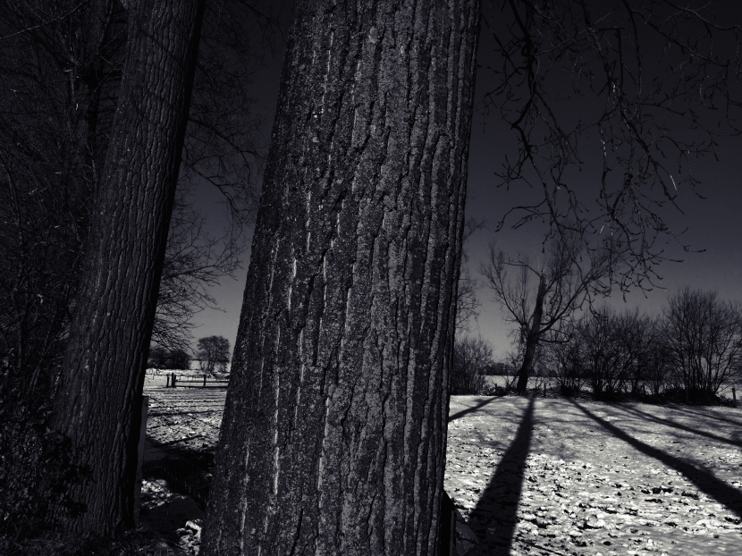 Black Snow Series © Sean Hayes