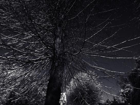 Black Snow Series © Sean Hayes
