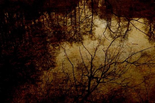 Winter Series © Sean Hayes