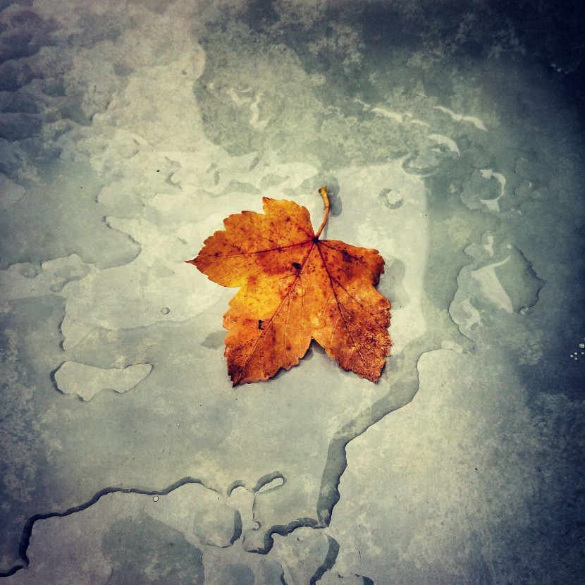 Awesome Autumn © Sean Hayes
