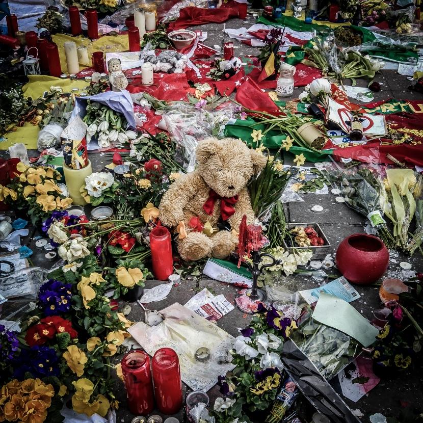 Bear_Brussels_1