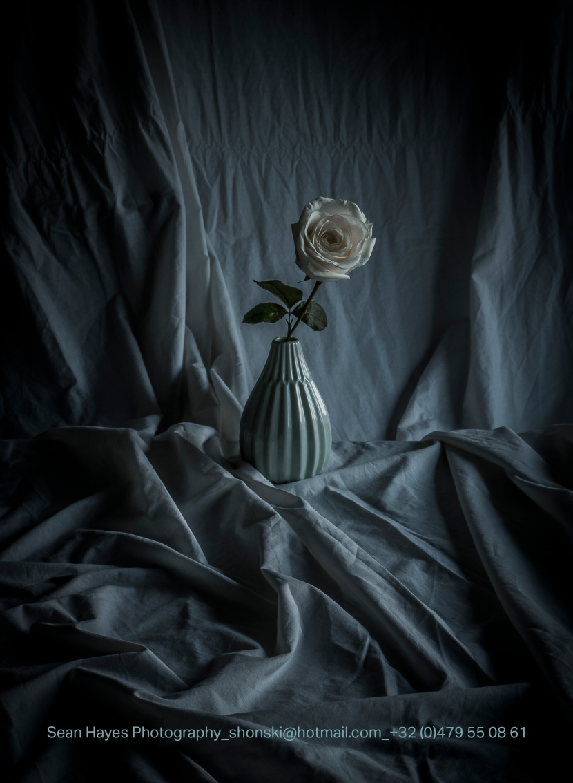 Rose_Still_Life_Dragan_ Promo